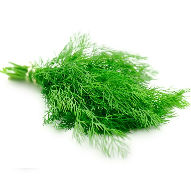 Herbes: Aneth Botte